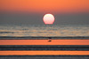 Morning Equation (gseloff) Tags: sunrise marbledgodwit bird fog sandbar tidalpool beach ocean water gulfofmexico bolivarflats galvestoncounty texas gseloff