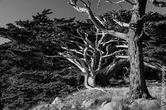 _IMG1396 (blackcloudbrew) Tags: pentaxk3 coast hike monterey pointlobos stateparks bw carmelbythesea california unitedstates us