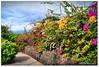 Blütenzauber (Don111 Spangemacher) Tags: blüte bunt blumen blüten himmel herbst sträucher pflanzen park promenade puertodelacruz teneriffa reisen wolken wege städte insel kulturlandschaft garten