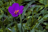 COLORI DELLA FORESTA    ----     COLORS OF THE FOREST (Ezio Donati is ) Tags: foresta forest erba grass natura nature colori colors macro fiori flowers africa costadavorio areabingervilla