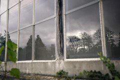 Autmn in Focus (memories-in-motion) Tags: glas glass reflection spiegelung fassadae herbst autumn fall tree branch wall weather change clouds tilt shift 24mm canon 5d focus light tse24mmf35lii