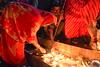 KOLAYAT FAIR -Kartik Deep Daan enlightens the chamber of Heart (Desert_photographer) Tags: kolayat fair kartik deep daan enlightens chamber heart redemption mankind lighted lamps earthen pots offered lord krishna enlightensthechamberofheart dispels dark delusion path divine light