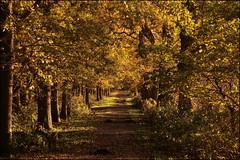 Midwolder Bos (TeunisHaveman) Tags: autumn herfst kleuren