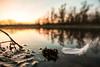 Dove passano i cigni (Sinisa78) Tags: bernate lanca ticino barca fiume cigno swan tramonto sunset piuma acqua water river reflection