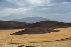 Palouse DSC_7657 (Doina Silvan) Tags: palouse fall wheat harvest washington wa usa scenic view hills layers light shadow color curve patterns textures fields grain natural nature outdoor yellow brown golden