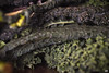afternoon stories. (Andrea // AT Graphics!) Tags: autumn fall cabbage cavolo blackcabbage cavolonero cavoloriccio cooking vegetables veggies fujifilm fuji xe1 xmount macro tamron90mm macrophotography green details closeup sunday