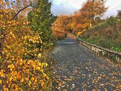 lost lagoon trail (iggy j) Tags: lostlagoon vancouver stanleypark autumn fall