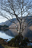 Winter Tree (rdspalm) Tags: glenveigh glenveagh donegal realireland ireland irishlandscapes