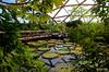 Amazonica (Jan Slob) Tags: rotterdam blijdorp amazonica zoo zuidholland netherlands holland plants nikon nikond7000 ©allrightsreserved vlindertuin reuzenwaterlelie explore
