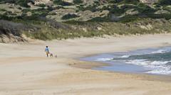 Stroll (Keith Midson) Tags: cliftonbeach tasmania beach person walking woman girl dog dogs recreation surf sand