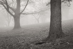 Silent Hill (Lee Chu) Tags: fog highpark fogto project365 sel35f18 sonynex6 toronto ontario canada