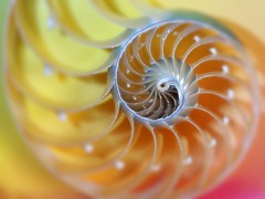 Nautilus (Smiffy'37) Tags: nautilusshell nature macro arty artistic postproceessing colourful closeup object