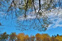 Autumn sky (namhdyk) Tags: tree trees autumn autumnalleaves fall canon canonpowershot canonpowershotg7x