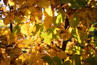 This autumn (3/4)