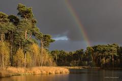 Lucky me! (karindebruin) Tags: geel autumn herfst clouds dutch nederland fallcolors holland lucht landschap landscape meer lake vennen fens trees bomen sunshine water rainbow regenboog oisterwijk brabant
