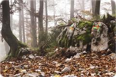 Forests of Srnjak, above Logatec (rlubej) Tags: notranjska forest fog