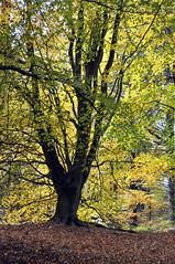Photo of Autumn Glory