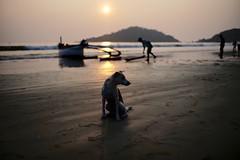 Goan beach (John Whitehouse2010) Tags: 35mm leica beach india