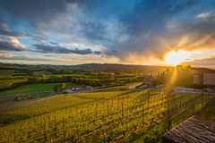 cavour toward sinio sunflare (36 of 1) (sassiitalytours) Tags: wine piemonte castle italy italia winecountry vino