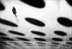 F_47A0262-2-BW-1-Canon 5DIII-Tamron 28-300mm-May Lee 廖藹淳 (May-margy) Tags: 時空 maymargy bw 黑白 人像 剪影 斗篷 下雨 廣場 地坪 玻璃 點點 點滴 poncho plaza pavement granite glass raining portrait silhouette streetviewphotography linesformandlightandshadow mylensandmyimagination naturalcoincidencethrumylens 街拍 線條造型與光影 天馬行空鏡頭的異想世界 心象意象與影像 幾何造型 同中求異 點人 humaningeometry taiwan repofchina 台北市 台灣 中華民國 圓點 原點 f47a02622bw1 canon5diii tamron28300mm taipeicity