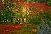 Early Morning Autumn Maple 4640 B (jim.choate59) Tags: jchoate japanesegarden portlandjapanesegarden portland pdx tree maple autumn fallseason fallleaves sunrise sunstar colorful garden d610 on1pics hss
