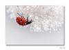 Accroché aux étoiles ... (jeremie.brion) Tags: coccinelle nature macro proxy ladybug