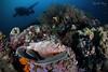 C O U C H (Randi Ang) Tags: gili air giliair island giliislands lombok indonesia underwater scuba diving dive photography wide angle randi ang canon eos 6d fisheye 15mm randiang