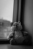 The eternal recurrence (Nerdgirl1993) Tags: peluche black white death nostalgia depression stuffed bear animal window nietzsche youth childhood eternal recurrence universe