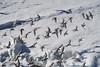 Sanderlings at Sharp Park (AGrinberg) Tags: 62537sanderlings sanderlings birds flying wave water foam sharp park beach pacifica california