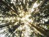 Forest Furnas (Alvaro RP) Tags: review forest trees arboles bosque naturaleza nature hike wide above green jungle luz light center lines vegetation up high woods fantasy wood sky bright brightness