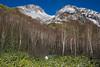 Mt.Yakedake (bamboo_sasa) Tags: 焼岳 上高地 北アルプス 松本 長野 信州 岐阜 日本 山 百名山 火山 yakedake kamikochi japan alps matsumoto nagano shinshu gifu mountain volcano winter autumn