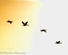 Flying South (BobHartmannPhotography) Tags: hartmann sunrise swr birds bobhartmanncom wakodahatcheewetlands bobhartmannphotography wildlife wwwbobhartmanncom c2017bobhartmann bobhartmann 365 everglades 1365 landscape wl fl usa