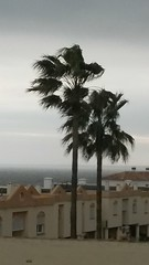 20170202_140620 (rugby#9) Tags: andalucia spain costadelsol fuengirola clublacosta holiday complex palmtrees palm trees cloud clouds plant palmtree outdoor pueblomarina apartment apartments greysky windy