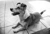 Léo (yoshimi_su) Tags: animaldeestimação cachorro cão d3200 léo susanyoshimi diadema dog fotografia nikon photography sp sãopaulo photograph