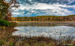 lake warren in the fall (dfbphotos) Tags: 2017 october fall buckscounty places lakewarren water nature lake ottsville pa usa