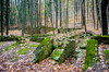 Remington Ruins (charlie_guttendorf) Tags: guttendorf lycoming nikon nikon18200mm nikond7000 abandoned empty homestead moss ruins rural stone vacant