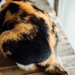 CAT thumbnail