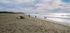 Sonoma Coast State Beach, Bodega Bay, California (trphotoguy) Tags: contaxrtsiii carlzeissdistagon35mmf14 fujicolorpro400h pro400h sonomacoaststatebeach bodegabay california northsalmoncreekbeach film carlzeissdistagon35mmf14mmj