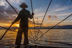 Fisherman and traditional net at sunset- Inle Lake, Myanmar (Phil Marion) Tags: myanmar burmese mon buddhist philmarion candid woman girl boy teen 裸 schlampe 나체상 벌거 desnudo chubby nackt nu ヌード nudo khỏa 性感的 malibog セクシー 婚禮 hijab nijab burqa telanjang nude slim plump tranny sex slut nipples ass xxx boobs tits upskirt naked sexy bondage fuck tattoo fetish asian oriental erotic lingerie cameltoe feet cock desi hindu japanese african khoathân latina khỏathân beach public swinger toy outdoor cosplay gay wife dick