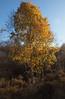 2017_11_0277 (petermit2) Tags: hatfieldmoors hatfield lindholme doncaster southyorkshire yorkshire peat bog humberheadpeatlands humberhead naturalengland nnr