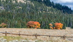 Color on the drive (Pejasar) Tags: apen change color fence drive bighornnationalforest wyoming