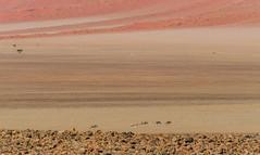 colors of Namibia (Karl-Heinz Bitter) Tags: zebras colors sand sanddunes dunes red stones desert namibia landscape landschaft karlheinzbitter travel reise africa