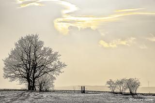 Winter sun in Misslareuth