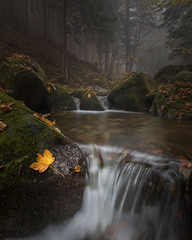 The Source (Luca Libralato) Tags: autumn fall stream waterfall water jump leaves trees rock river wood lucalibralato libralato canoneos5d4 canon1635
