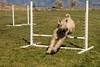Nickie Agility-21 (pegeshea) Tags: agility nickie
