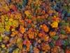 Autumn leaves#DJI Spar#Spark #Fall (ye_chazzyflippa) Tags: dji spar spark fall