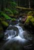 Forest Falls (Gary Randall) Tags: gar72322 oregon creek river moss mthood nationalforest landscape green