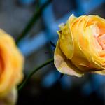 Flowers Softness thumbnail
