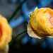 Flowers Softness