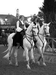 Golegã I (Chaudiere J) Tags: lusitano breed puro sangue golega cavalo horse cheval feira